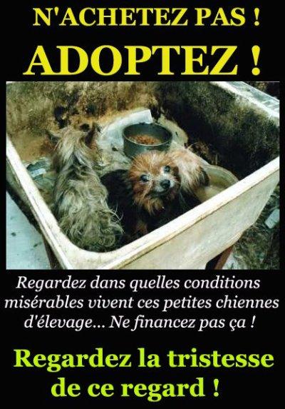 N'achetez pas de chiens/chats ! Adoptez !