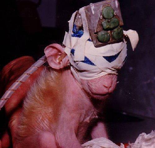 BOYCOTTEZ LES PRODUITS TESTES SUR LES ANIMAUX !!!!