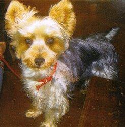 Neuilly : Un chien massacré par un agent communal dans l'indifférence générale