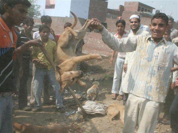 1 Pétition + 1 Mail : STOP aux massacres de chiens à Meerut, Inde !!!