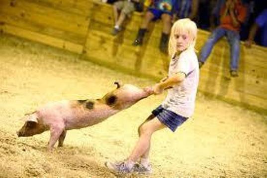 Lettre contre le Greased Pig Scramble (Virginie)