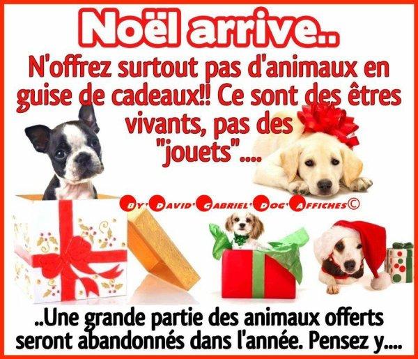 Les animaux ne sont pas des cadeaux !!!