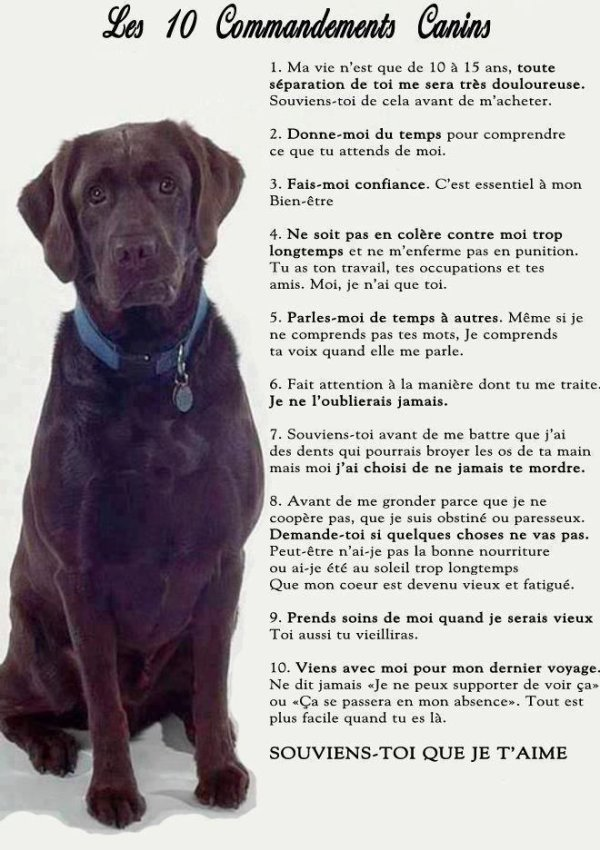Les 10 commandements canins