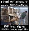 Stop aux massacres des chiens au Maroc !
