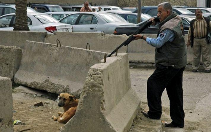 JO de Sotchi : hors caméras on extermine les chiens...
