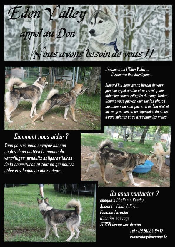 Les chiens de Nicolas Vanier à placer .......