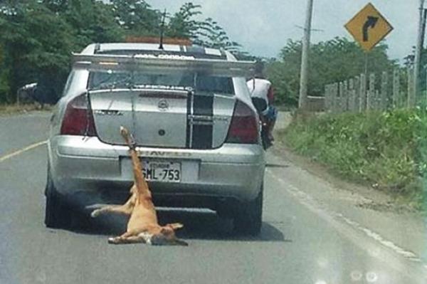 Attaché à une voiture par son jeune maître de 9 ans, le chien est traîné sur plus de 6 km