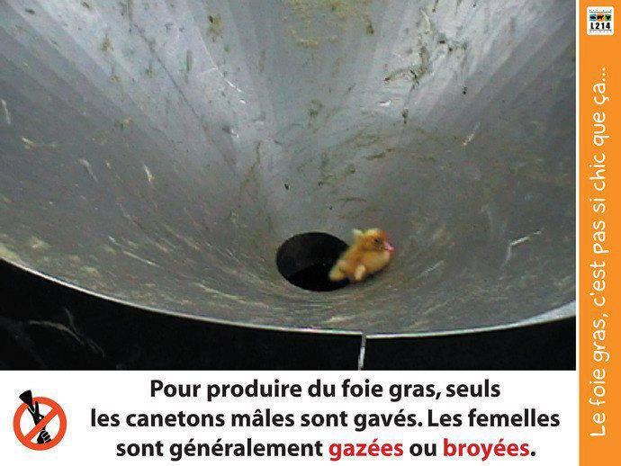 Le foie gras et les repas de fêtes - Salut Les Terriens (Canal+).
