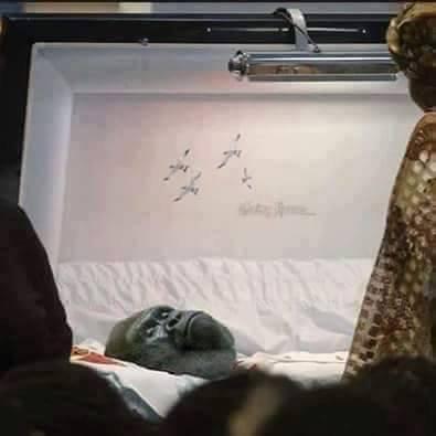 En mémoire d'Harambe .... assassiné pour avoir voulu protéger un enfant