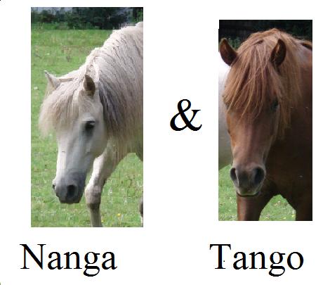 Présentation de Nanga & Tango