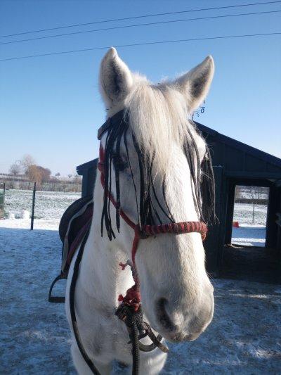 Neige! (4 février 2012)