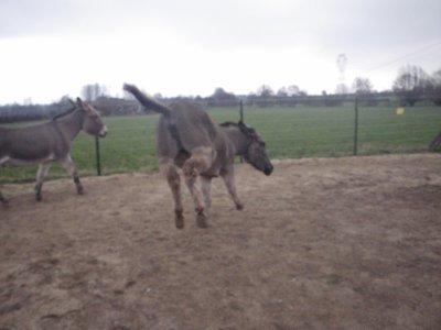 Travail en liberté pour Martin et Vicky! (10 mars 2012)