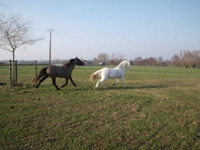 Récréation en patûre! (15 mars 2012)