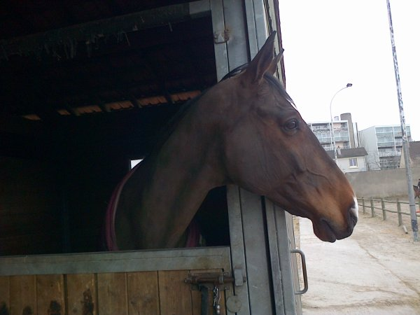 L'exelent (cheval de proprio)