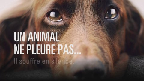 Article #8 : La maltraitance animal.