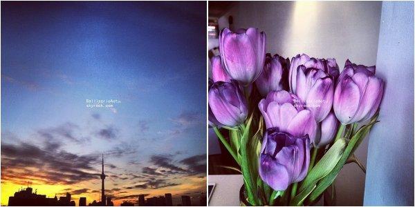 06-07/04/2014 : Troian et Instagram
