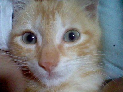 un chat qui est a moi!