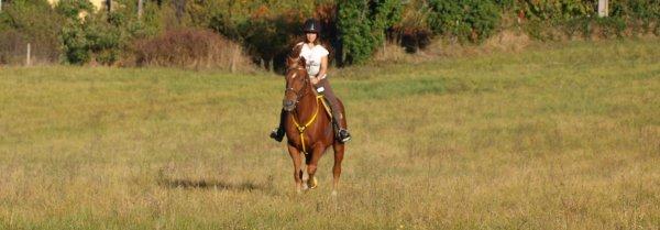 A part un cheval nommé Flash, je n'ai apprécié que des poneys et je ne pensais jamais retrouver ce petit truc qui fait qu'un simple cheval devient si particulier à nos yeux. Jusqu'à lui !