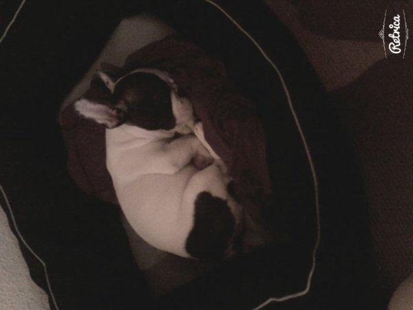 Ma chewie dort *-* trop mimi