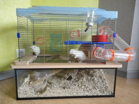 La cage :)