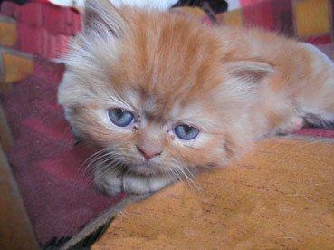 chatons de Isis et Ewine 2010