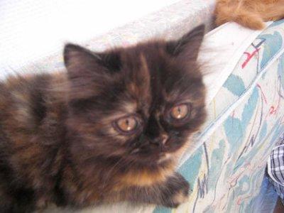 chatons de Isis et Ewine 2010 / Filomène