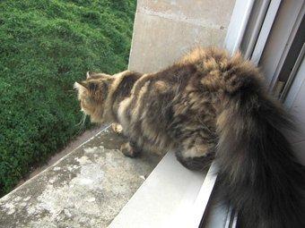 Fabyo, chaton de Isis