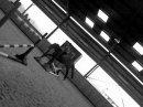 Photo de xSo-horse