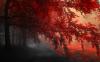 Au coeur de la forêt....