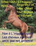 Photo de non-hippophagie-non