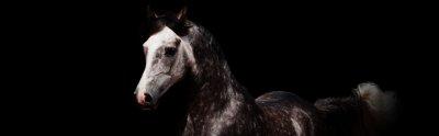 Un cheval gris dans un fond noir: c'est tout simplement magnifique non ?