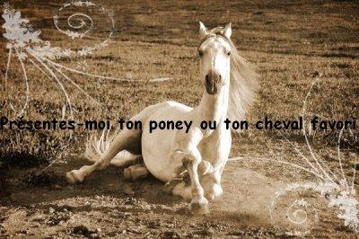 Présentes-moi  ton poney ou ton cheval préféré