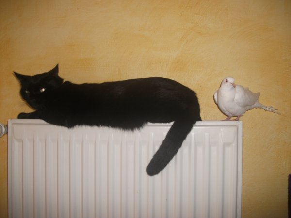 Choupi et la colombe