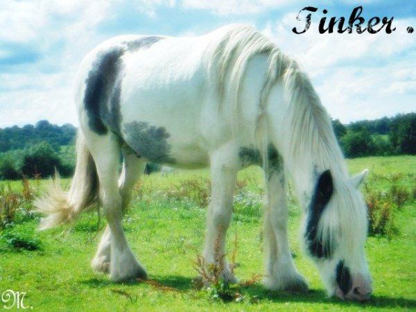 Tinker ( ܤ )
