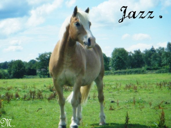 Jazz `Ouuu ( ღ ) `
