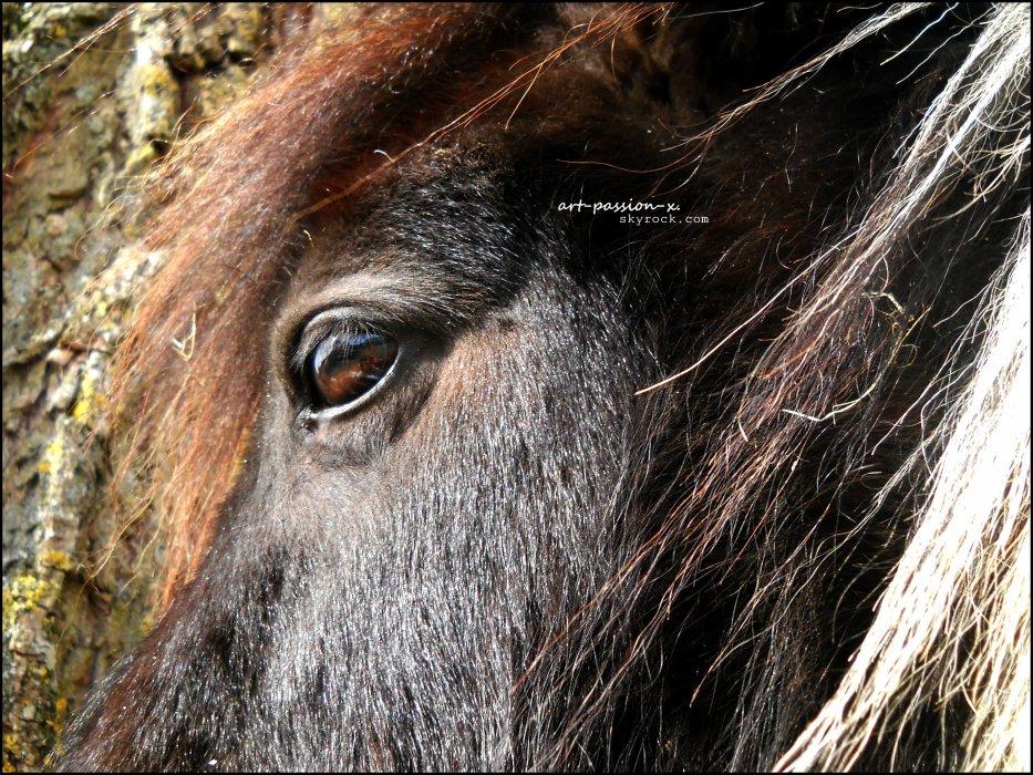 Blog de pony-z