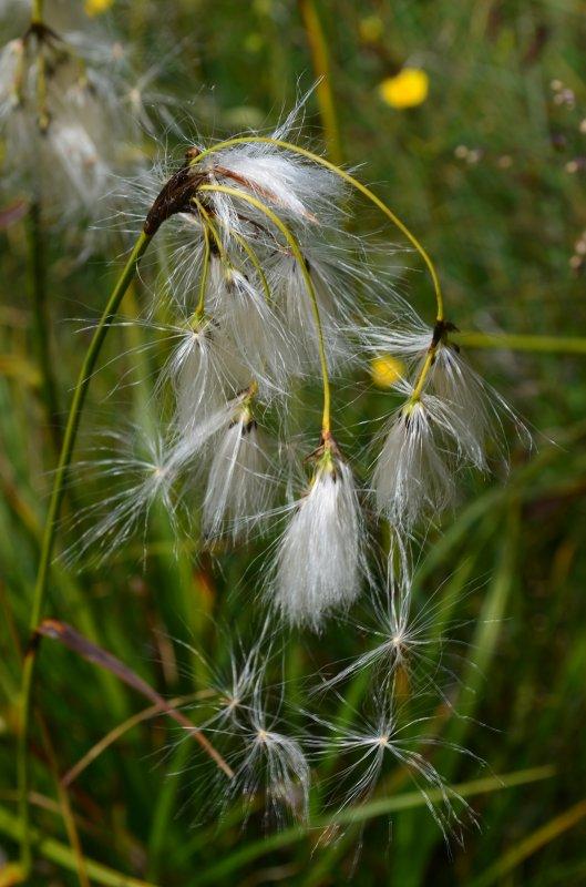 Fin de l'été, l'automne, les graines s'envolent