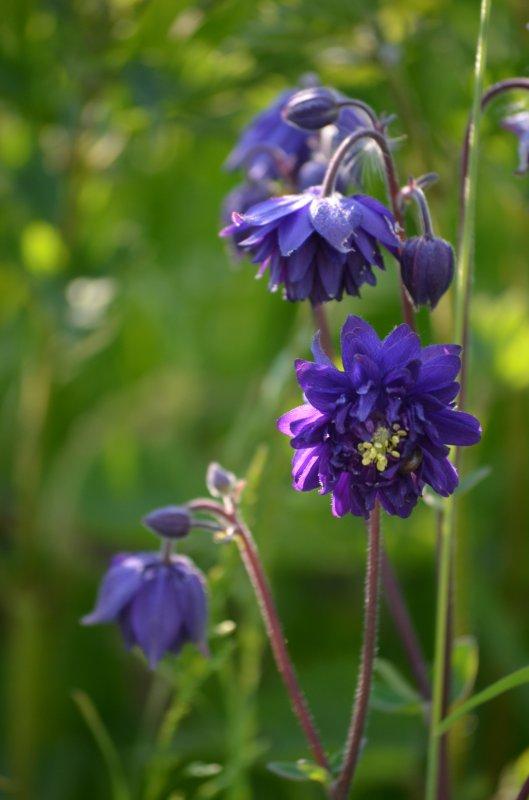 Fleurs  sur tons mauves