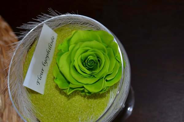 Rose lyophilisée