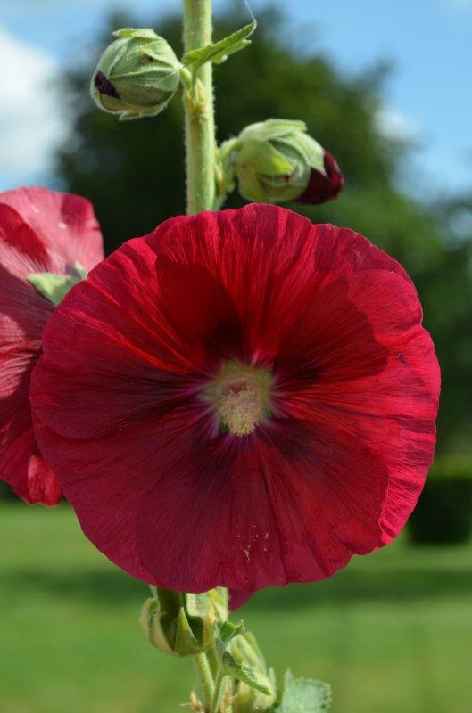 Des fleurs, et autres merveilles de la nature