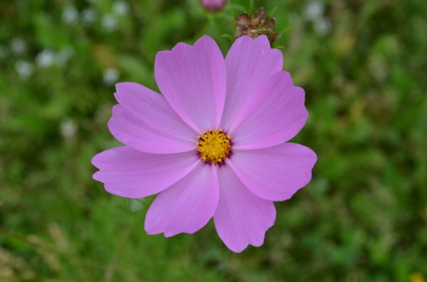 Parterre communal  naturel fleuri