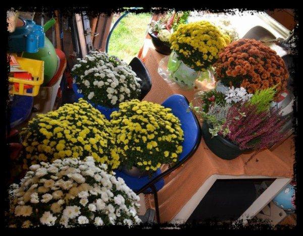 Avant la toussaint les fleurs s'offrent ou se préparent