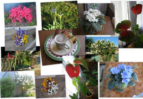 fleurs.petit gouter dans le jardin