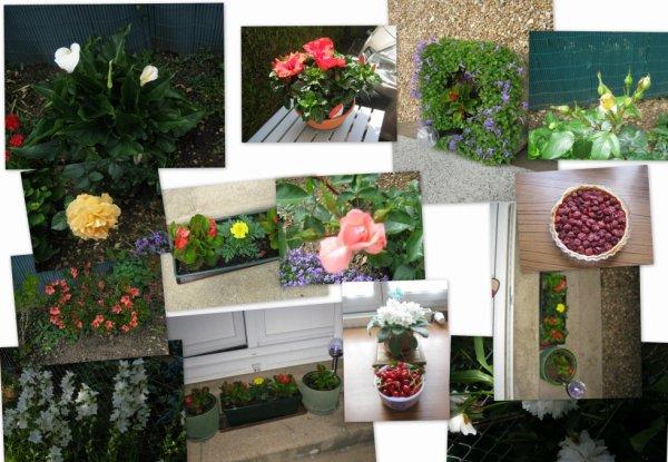 fleurs et cerises