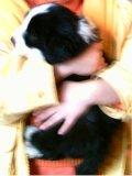 Photo de mes-animaux-cm