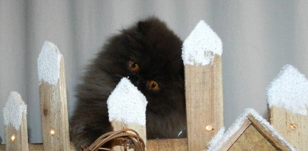Titulaire du CETAC  N° C-2315                Certifcat d'Etudes Technique de l'Animal de Compagnie (formation mai 2012 )