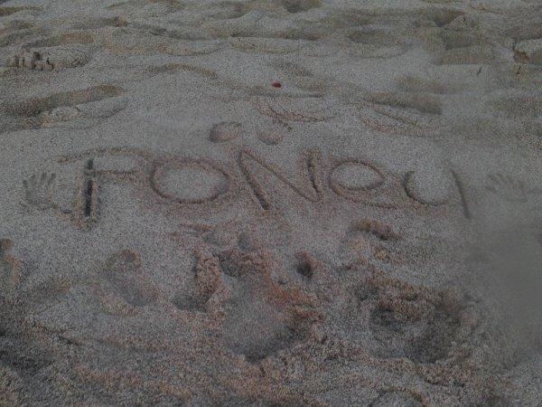 j'adore les poney ♥♥♥