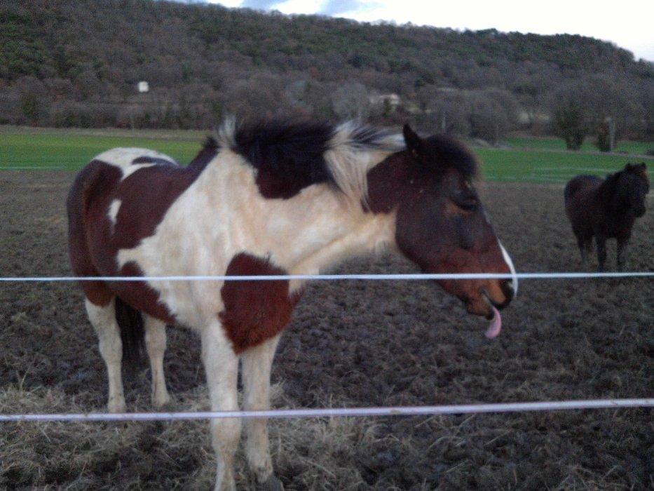 ♥ Nos meilleurs amies ♥ Les chevaux ♥