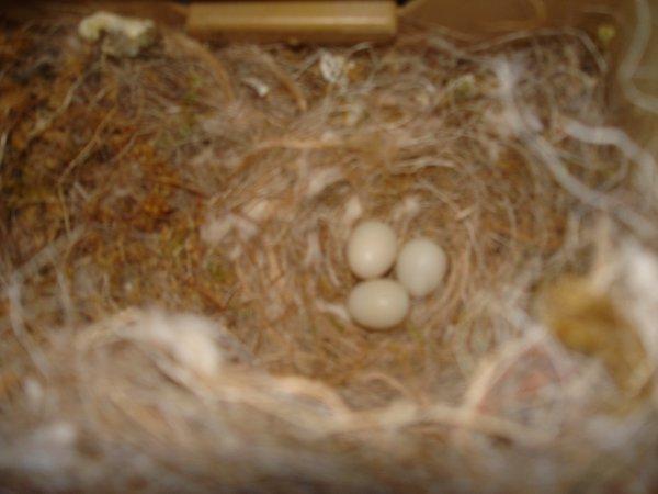 Elle tient le nid.