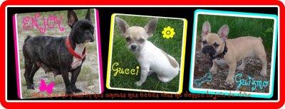 Je vous invite a visite mon blog de Mes chiens (bouledogue français , et chihuahua)